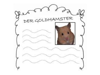 der-goldhamster