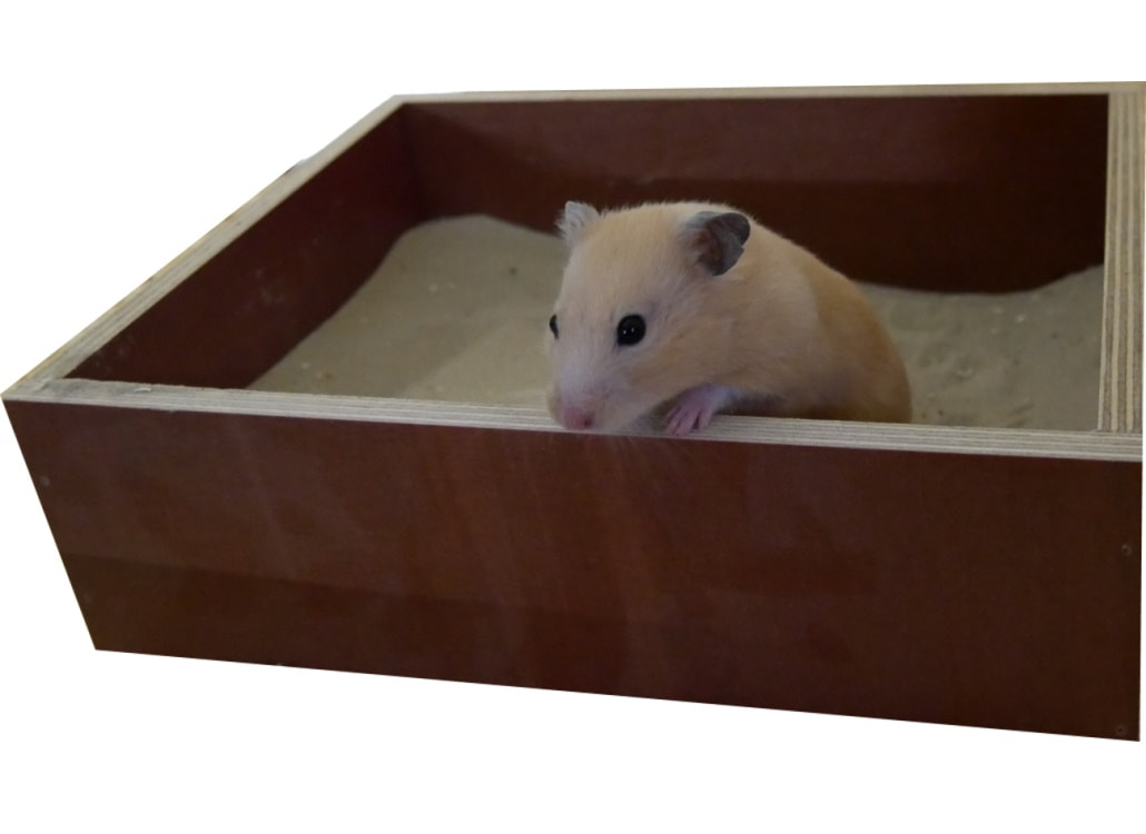 hamster-im-sandbad