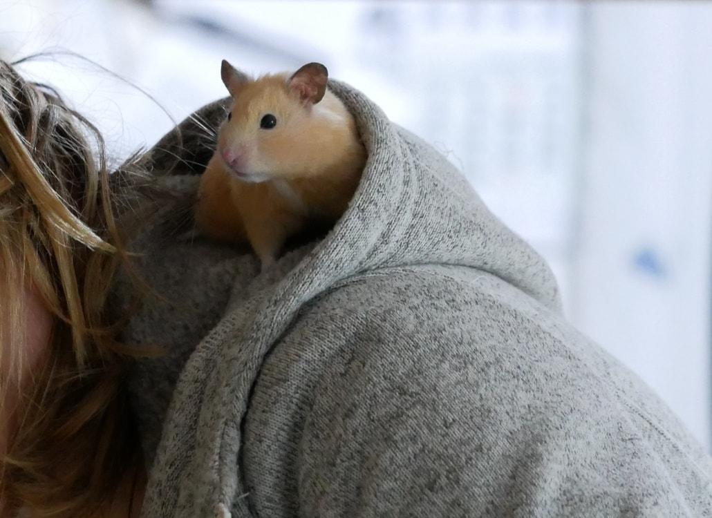 hamster-beim-klettern