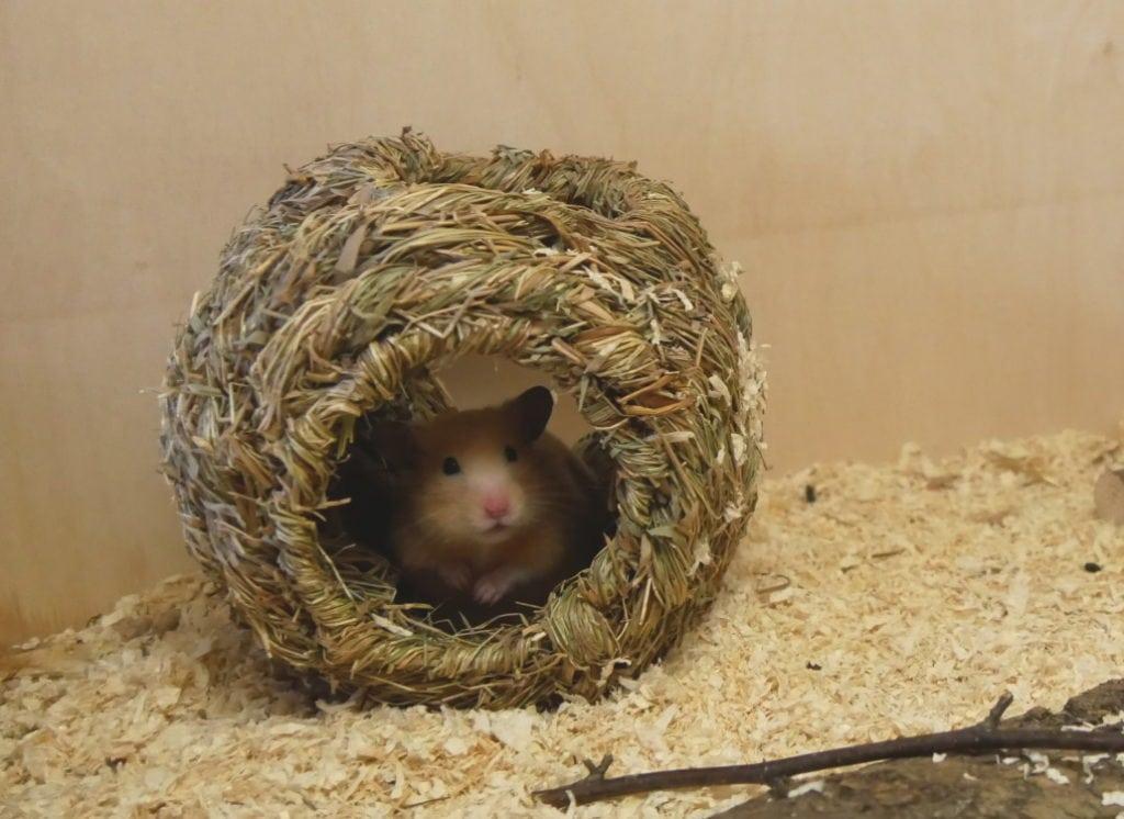 hamster_in_graskugel