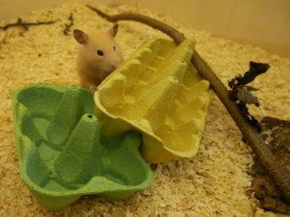 hamsterspielzeug-gegen-langeweile