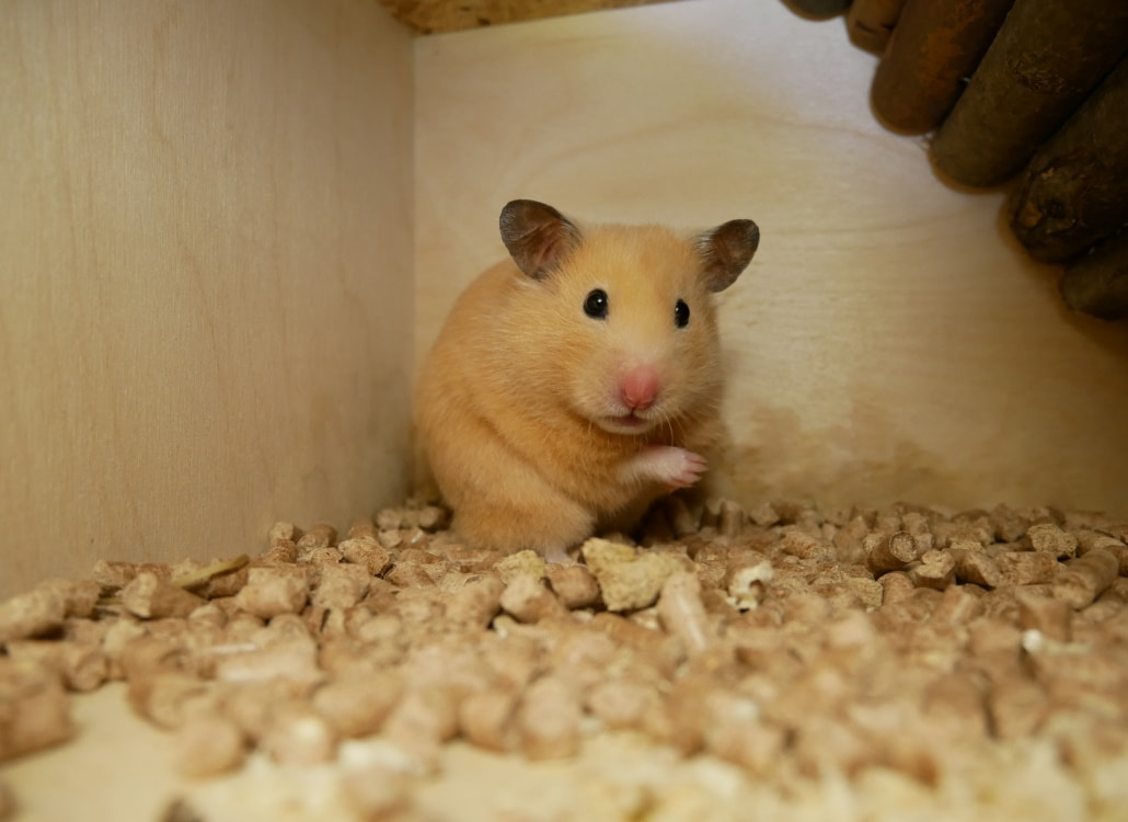 abschied-alter-goldhamster