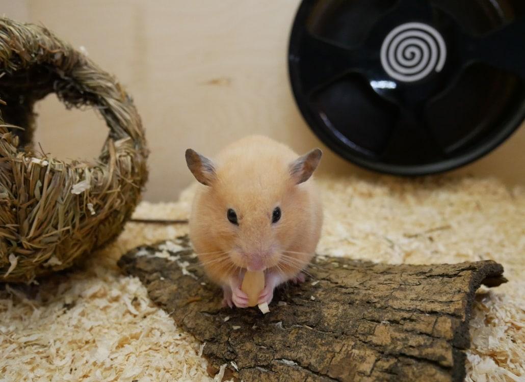 altem-hamster-leben-erleichtern